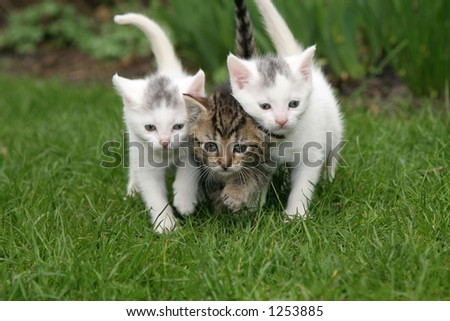 Small kittens walking in the garden close together