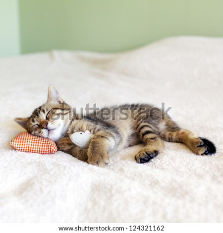 Small Kitty With Red Pillow and Mouse