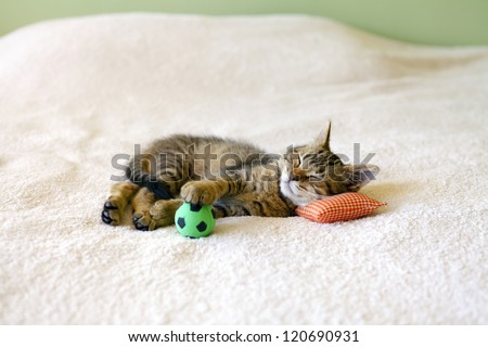 Small Kitty With Red Pillow And Soccer Ball