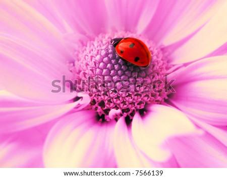 Small ladybug sleeping on flower's petals
