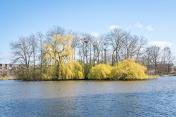 Small lake in a park with Weeping Willow trees hanging in the water
