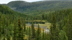 small lake sourrounded by fir tree forest in Swedish mountains