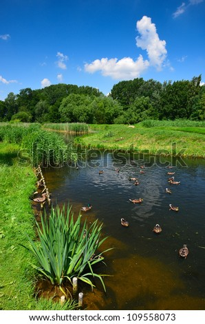 Small lake with ducks on the water in rural landscape of Poland