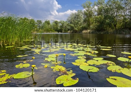 small lake with lilies