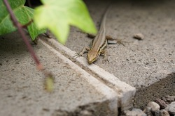 small lizard on a stone