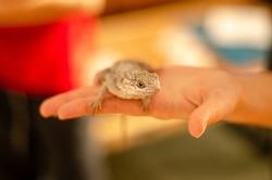 small lizard on hand. reptile on hand. lizard isolated. lizard on hand.