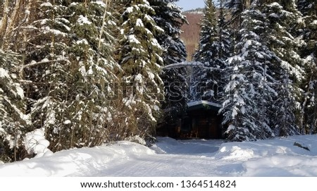 Small Log Cabin within a Forest of Evergreens; Winter Season, Snow, Cozy Ideas #1364514824