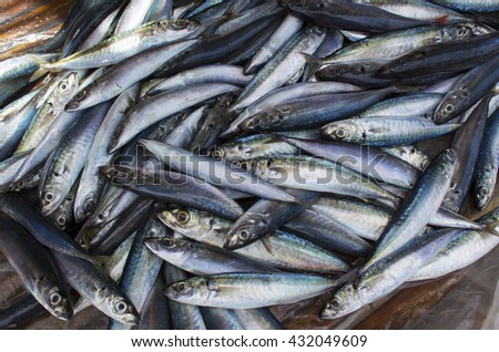 Small mackerel fishes on shop display. Pile of sea fishes for sell. Seaside fisherman catch. Raw fish meat. Grey silver mackerels ready for cook. Fresh healthy seafood image for cooking recipe book