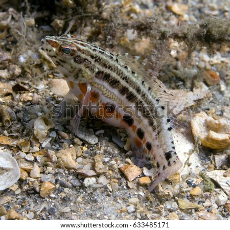 Small macro fish #633485171
