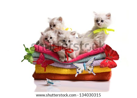 small many gray furry cats, stack of soft towels and colorful  butterflies on white background