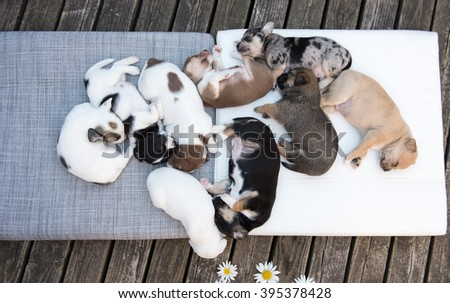 Small Mixed Breed Puppies Sleeping in Dog Pile Outside #395378428