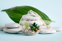 Small modern decorative glass open terrarium bauble for plants on blue background with stacked zen stones and palm leaf, copy space.