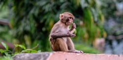 small monkey eating a fruit