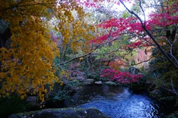 Small mountain river with rocks covered with bright yellow, red, orange autumn leaves deep in the forest. Cliffs in Cheile Rametului, Romania. Beautiful, calming and relaxing nature background