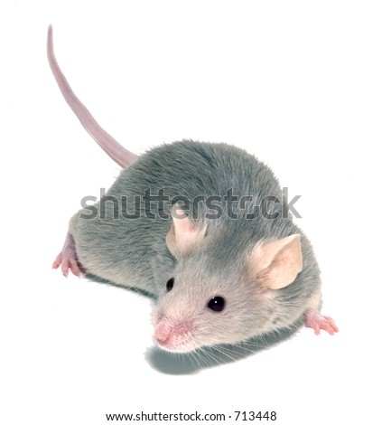 small mouse - stock photo