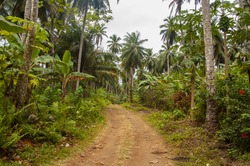 Small muddy road going through a dense tropical forest with palm trees in Africa.
