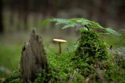 small mushroom growing on tree stump