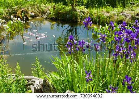 Small natural garden pond with lilies