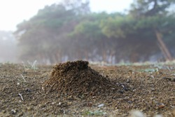 small nest of ants