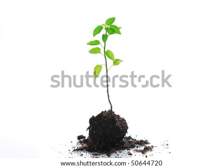 small new plant isolated on white