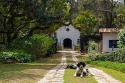 small old colonial Portuguese chapel in São Paulo, Brazil. with a dog lying in front