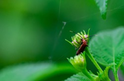 Small orange (Pumpkin beetle, Cucurbit beetle, Squash beetle) insect walking on green leaf against a blurred background.