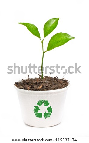 Small orange tree potted in paper recycle pot isolated on white background.