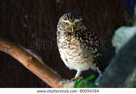small owl on the tree branch