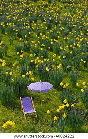 Small parasol and canvas chair on a daffodil meadow