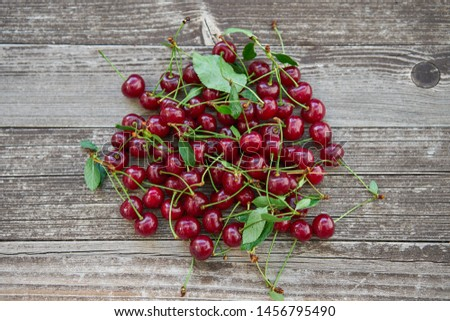 Small pile of harvested fresh and juicy organic red riped sour cherries with leaves, full of nutrients and vitamins ideal for healthy light snack or like ingredient for preservating or baking  cakes.