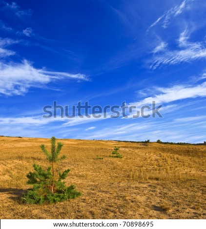 small pine tree in a sand desert