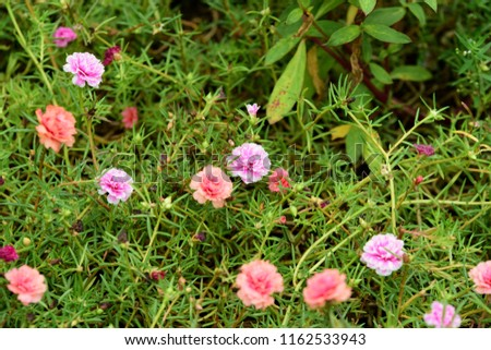 Free photos small pink white flowers cluster in bloom avopix small pink flowers at the green leaves beauty in nature use as background image mightylinksfo