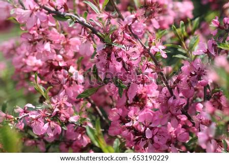 Small pink flowers bush sunlight ez canvas small pink flowers bush sunlight mightylinksfo