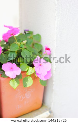 Small pink flowers planted in a flowerpot on a white wall