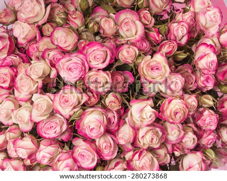 Small pink roses bouquet close up. #280273868