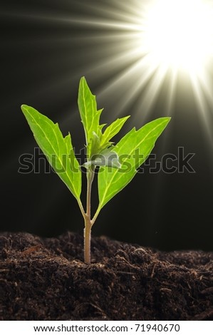 small plant and soil on blue background with sun and copyspace