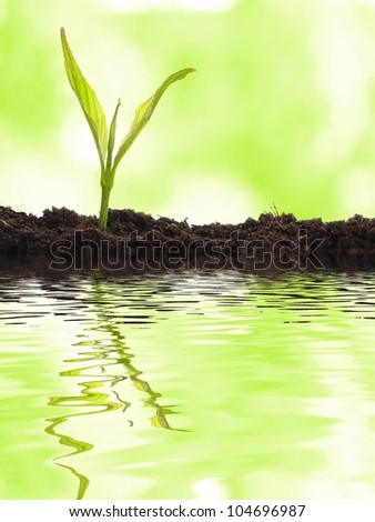 small plant and water reflection showing summer or nature concept