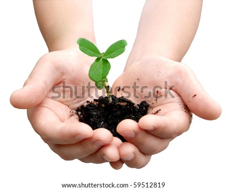 Small plant cupped in child's hands