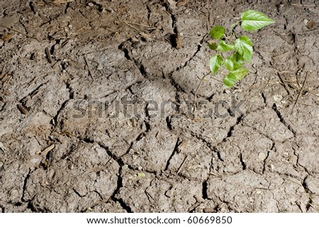 Small plant emerging from cracked soil