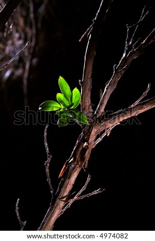 small plant growing from a dry and dead wood