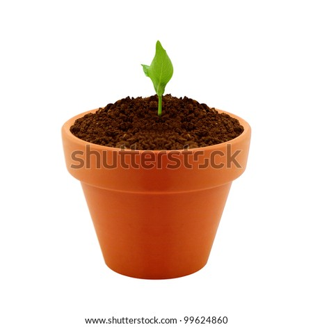 small plant growing in clay pot.