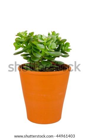 Small plant in orange pot