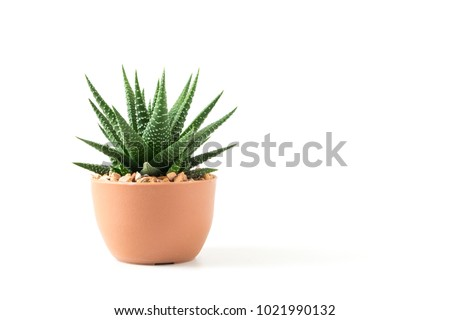 Small plant in pot succulents or cactus isolated on white background by front view #1021990132