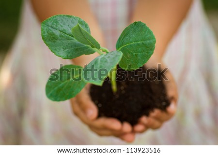 Small plant in the palm of a child