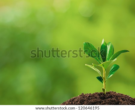 Shutterstock Small plant on pile of soil