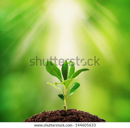 Small plant on pile of soil, part of it reflected #144605633