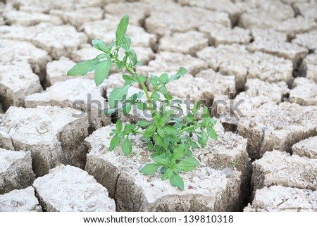 Small Plant on the Cracked Dry Land