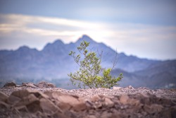 Small plant with a mountain in the background
