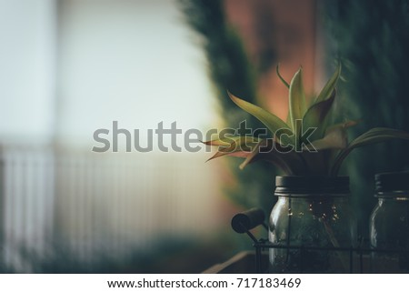 Small plants in glass bottle decorate in room with sunlight from the window, low key. Concept ecology and nature in the city.