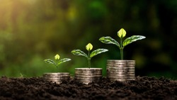 Small plants that are on stacked coins and ideas for saving money and starting a business.
